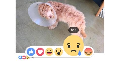 Facebook ra Like, Love, Haha, Wow, Sad, Angry trên toàn cầu