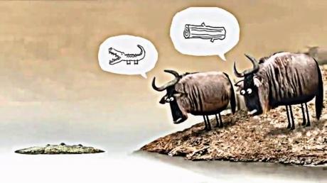 Đừng mãi ngu ngơ như bò đeo nơ nữa