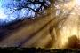 Bóng tối, giống như ánh sáng, đều là tài sản của cuộc sống