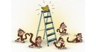 5 con khỉ và 1 nải chuối: Bài học về những nhà lãnh đạo vùi dập và nhân viên mù quáng