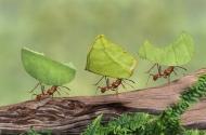 Hãy làm việc như những chú kiến và sống như những chú bướm