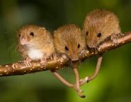Bài học về tình đoàn kết từ câu chuyện 3 con chuột