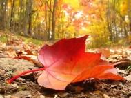 Lá lìa cành vì lá không biết quý trọng, hay là do cơn gió vô tình?
