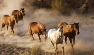 Chuyện ngựa hoang tìm cách diệt lợn rừng: Bất cứ ai cũng nên đọc để tự răn mình