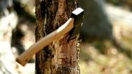 Cây to và cây nhỏ, bạn chọn chặt cây nào? và kết luận giúp nhiều người nhận ra thiếu sót