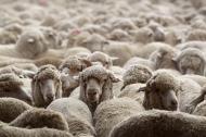 Cách nhanh nhất giúp bạn thất bại: Hãy đi theo đám đông