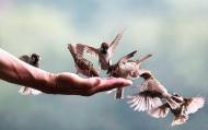 Lương thiện cần có chừng mực, hào phóng cũng phải có nguyên tắc