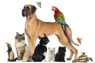 Speaking is easy: Pets