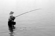 Câu cá và cần câu