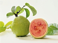 Chuyện ăn ổi ở Bỉ (Belgium Guava)