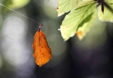 Nhân sinh điều gì không thể chờ, không cần sợ, không thể lựa chọn?